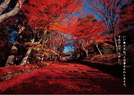 Autumn_2011_01_img_0011